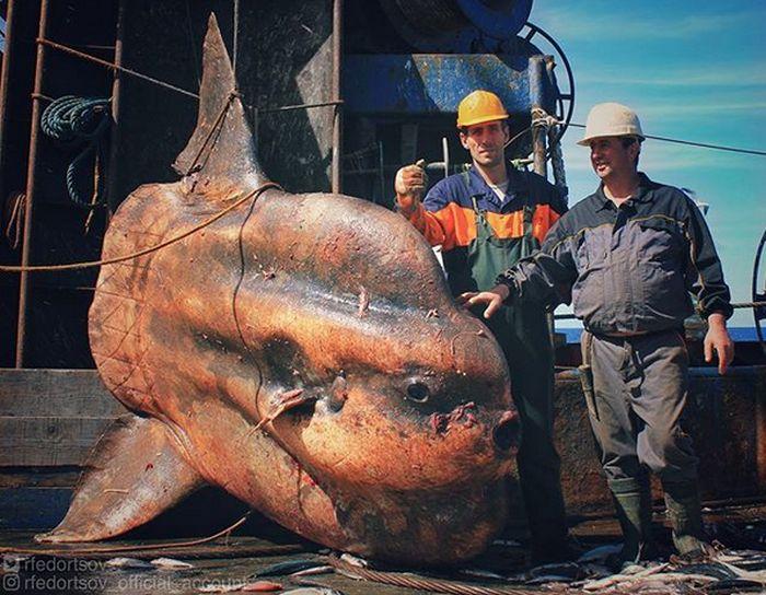 مورمانسك سيمان ينشر صور سكان غريبة من البحر (25 صورة)