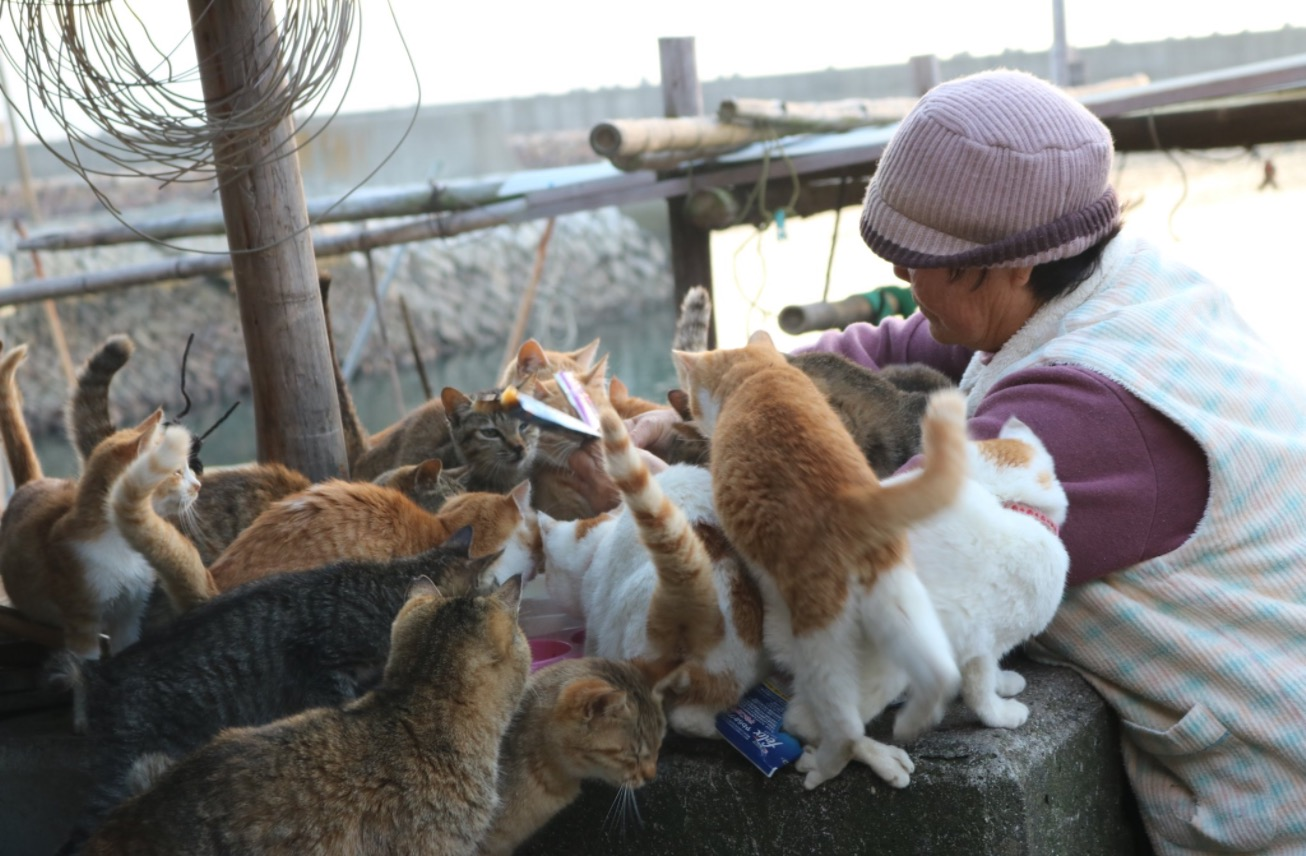 أوشيما - جزيرة القط في اليابان