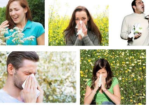 حمى القش