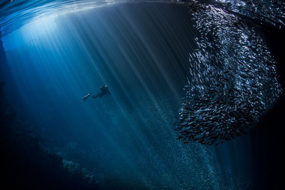 جوائز سيينا الدولية للتصوير الفوتوغرافي 2017
