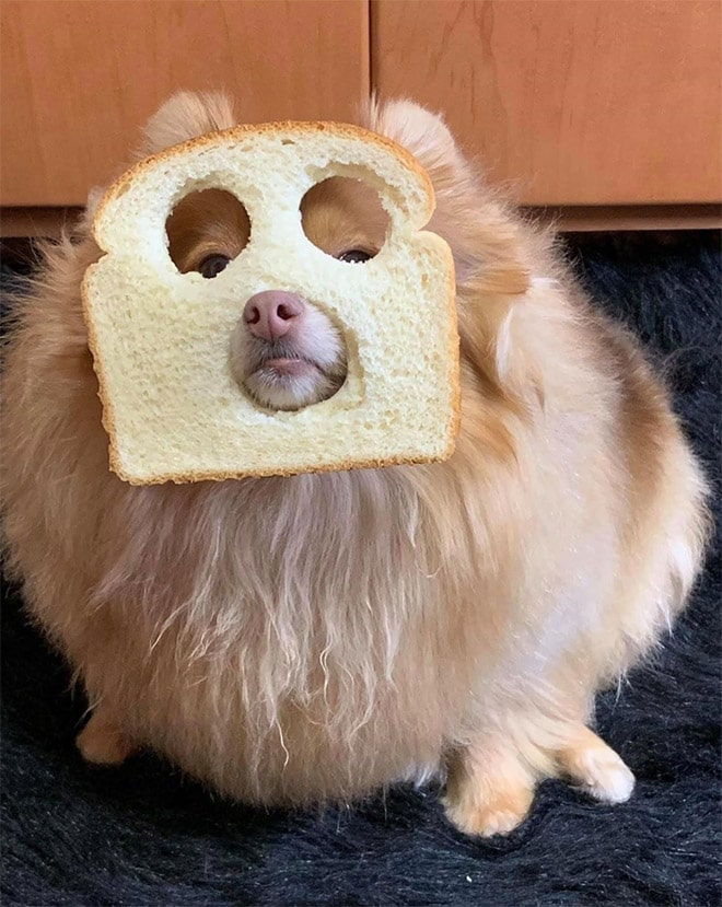 الكلاب التي ترتدي أقنعة الخبز
