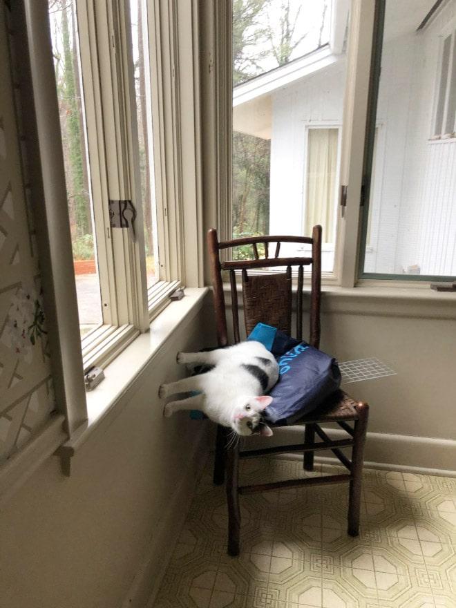 صور قطط تنتهك قوانين الفيزياء